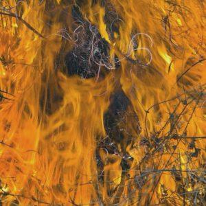 fire blog post